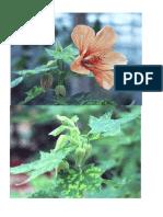 Laborator Floricultură2 Far[ Text