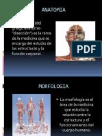 Conceptosde Anatomía