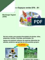 Morfologia das plantas.pptx