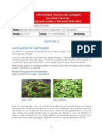 Topon Roberto Resumen Plantas Vasculares y No Vasculares