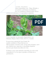 Cultivo de Holantao en Cañete