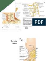 Plexul cervical.docx
