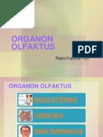 organ olfaktori.ppt