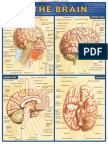 [Dale_Nibbe]_Brain_reference_guide(b-ok.org).pdf