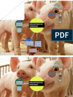 parasitosis porcino