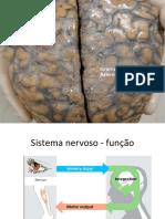 1-Organização do sistema nervoso