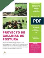 Proyecto de Gallinas - Junin