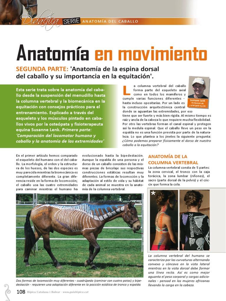 Artículo 2 Anatomía en Movimiento Hipica Catalana n120