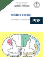 98269486-Medula-Espinal-Vias-Ascendentes.pdf