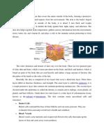 anatomy of the skin.docx