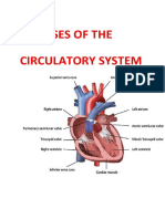 Diseases of the Circulatory System