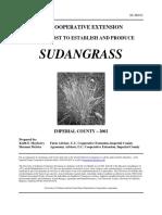 Sudan Grass 03