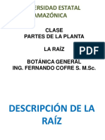 Botanica Clase La Raíz