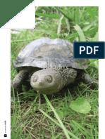 tortugas dulceacuicolas del Uruguay