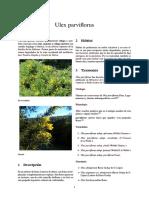 Ulex parviflorus(1)