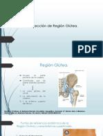 Anatomía R. Glútea.