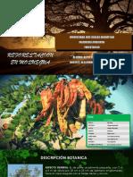 Reforestación en Moquegua