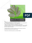 Composición Química de La Hoja de Guanabana
