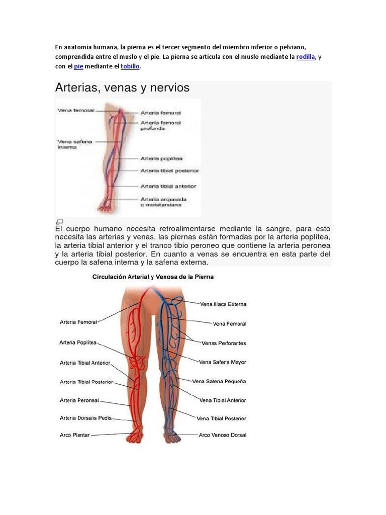 En Anatomía Humana
