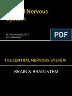 Brain & Brain Stem