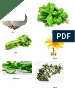 Imagenes de Plantas Medicinales