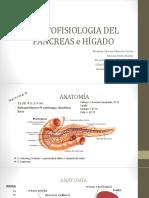 Anatomia Pancreas - Higado