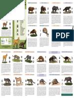 Identificando Mamiferos de La Floresta
