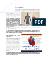 El Ciclo Cardíaco
