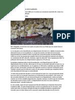 Crece La Demanda de Patos Entre La Población EL NUEVO DIA.com.BO
