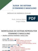PRATICA 2 - Morfologia do Sistema Genital Feminino e Masculi.pdf