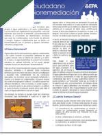 Biorremediación.pdf