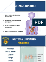 APARATO-URINARIo-final444