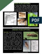 CAPITULO VIII Subclase Pterigota Plecoptera - Thysanoptera