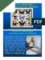 Montaje y Preservación de Insectos