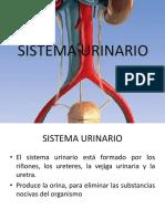 SISTEMA_URINARIO.pptx
