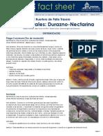 Plagas Frutales- Durazno y Nectarine