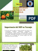 Cultivo de naranja