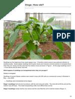 Sweet Pepper Seedlings How Old