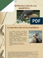La Reproducción en Los Mamíferos