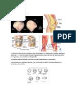 Fractura de Rótula.docx-rotula