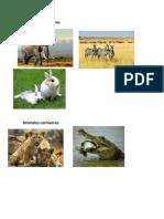 Animales Hervivoros y Carnivoros