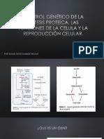 Control Genético de La Síntesis de Proteíca,(1)