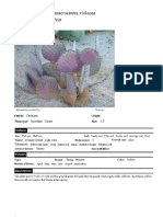 Succulents.pdf