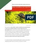 Arboles y Plantas Aromaticas Que Espantan Insectos