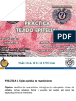 Practica Epitelial 1