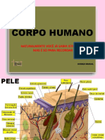 Corpo Humano (1)11