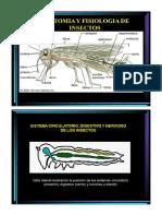 CAPITULO IV Anatomia y Fisiologia de Insectos