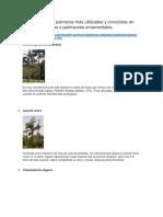 Las Especies de Palmeras Más Utilizadas y Conocidas en Jardinería