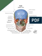 Anatomy - Netter's Atlas.pdf