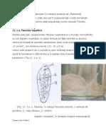 micro6-paraziti-continuare.pdf